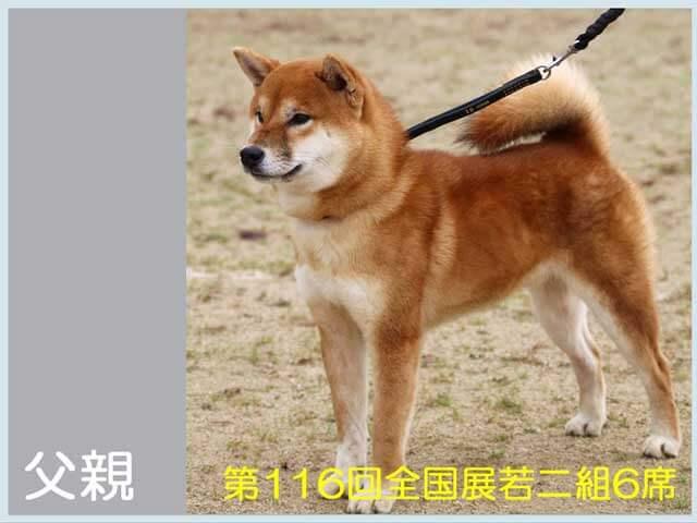 純犬紅丸号