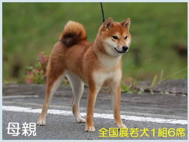 皇鈴の犬美号1