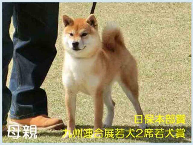 純犬真留姫号